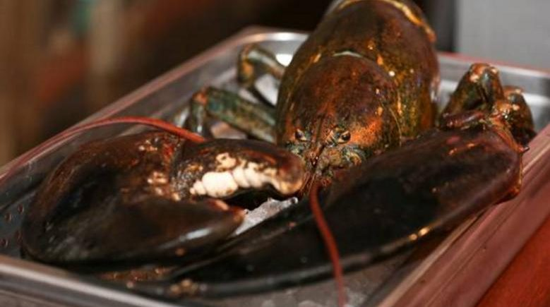 LARRY THE 110 YEAR OLD LOBSTER